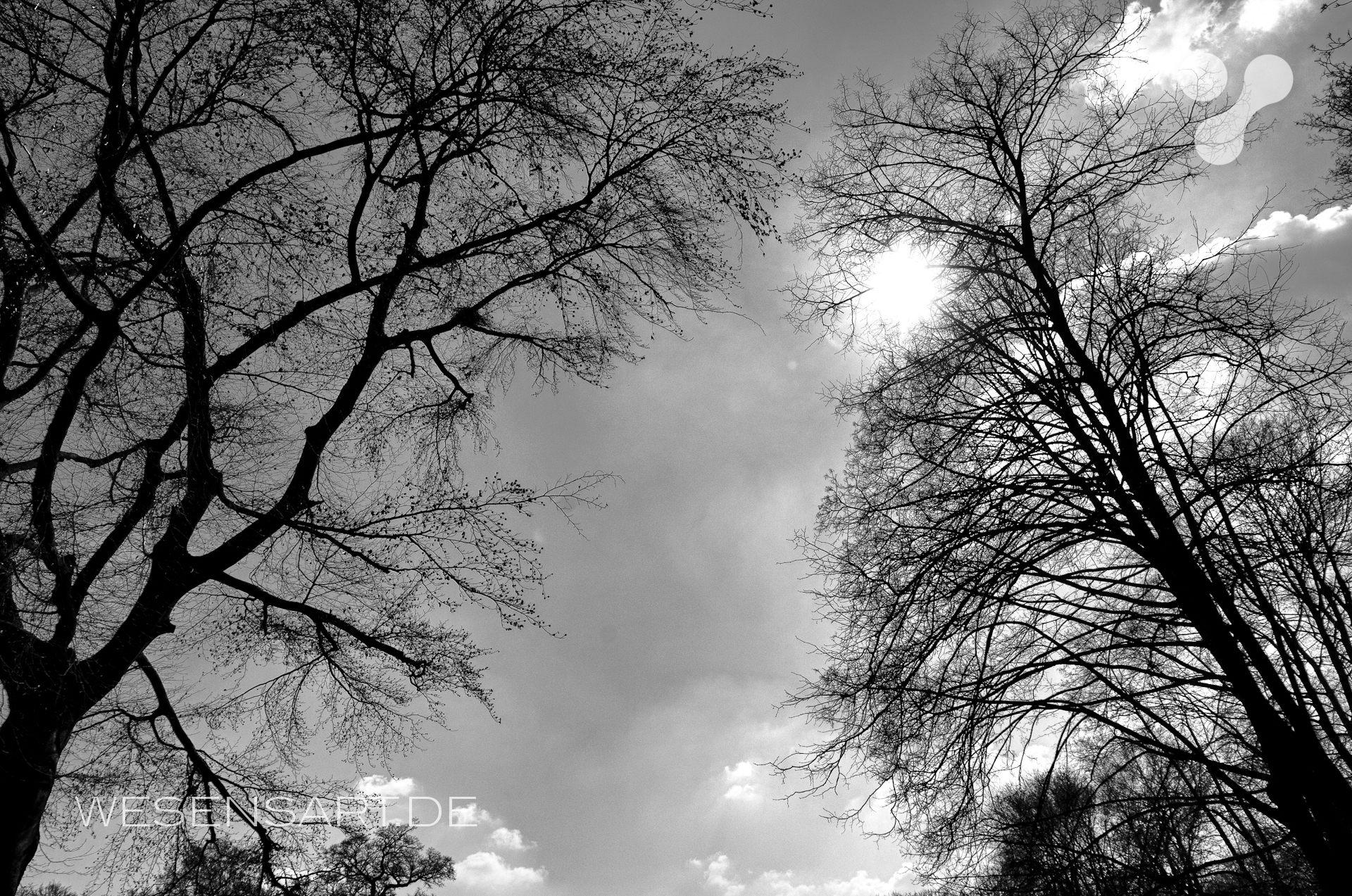Frühlingssonnenscheinbäume