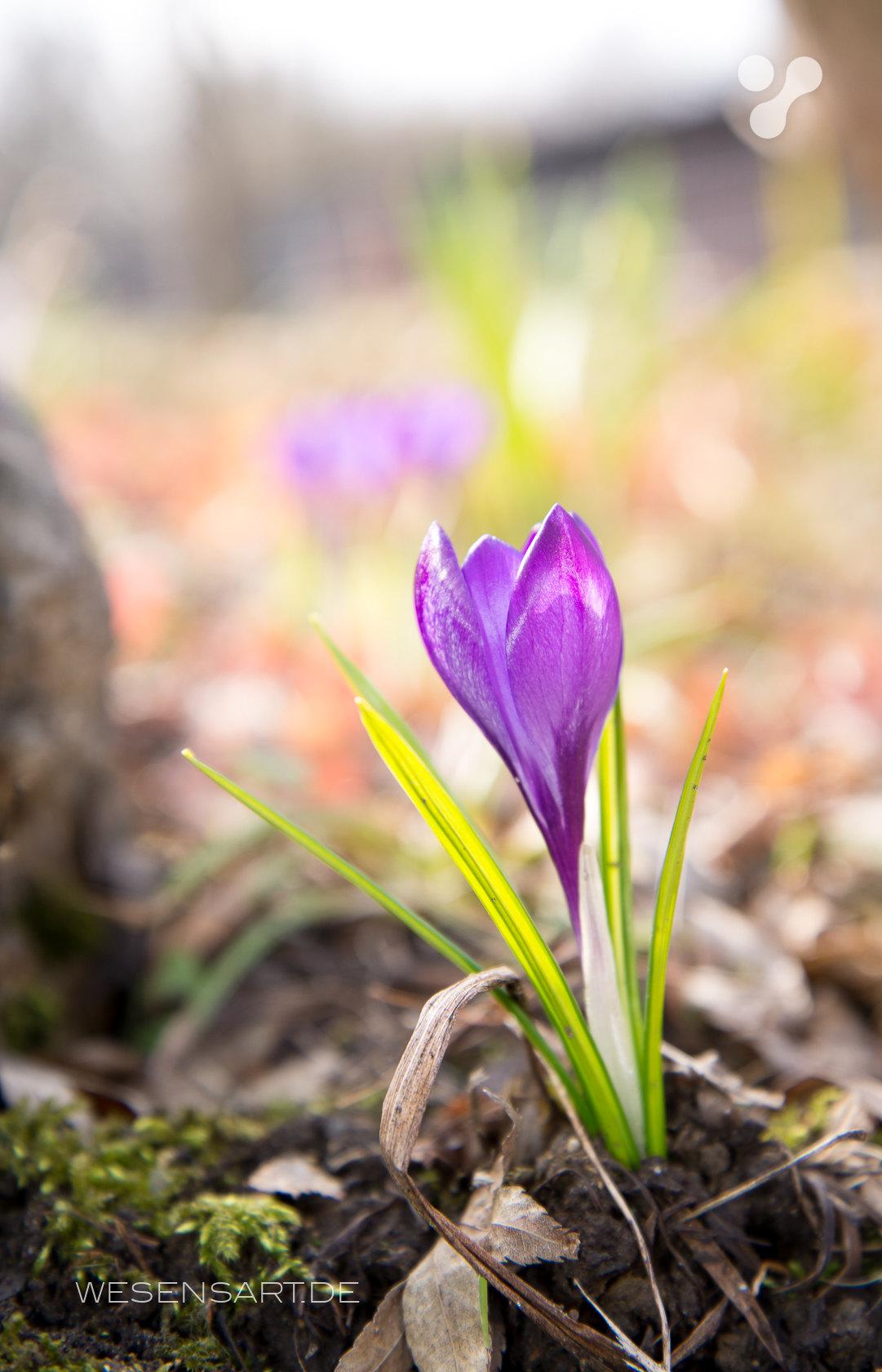 Frühlingserwachen im Westpark München